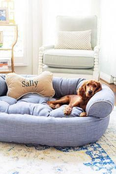 Dogs Hacks Dogs Diy Dogs Room Dogs Pictures Dogs Bed Dogs Collar Dogs Clothes Dogsclothes In 2020 Comfy Couch Pet Bed Couch Pet Bed Cute Dog Beds