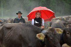 Viehhüten bei Regen: Den Menschen macht das schlechte Wetter mehr zu schaffen...