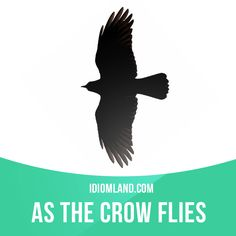 """""""As the crow flies"""" means """"by the most direct way, along a straight line between two places"""". Example: As the crow flies, it is about six kilometers between my house and downtown. #idiom #idioms #saying #sayings #phrase #phrases #expression #expressions #english #englishlanguage #learnenglish #studyenglish #language #vocabulary #dictionary #grammar #efl #esl #tesl #tefl #toefl #ielts #toeic #englishlearning"""