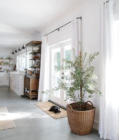 I've been reading about how to grow olive trees indoors. They need a southern window, and in my climate, placed outside in the winter because the indoor heater kills them. Good luck little Ollie. #GroveHouseLiving