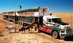http://static.commercialmotor.com/big-lorry-blog/2010/06/06/Unloading%20Cattle.jpg