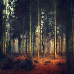 Fir Forest - texturized photograph  Prints: http://society6.com/DirkWuestenhagenImagery/Lines-In-Nature-Forest-of-Firs_Print