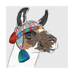 Llama , Posters and Prints at Art.com