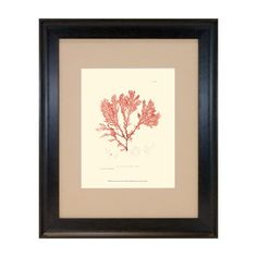 I pinned this Nature Print in Coral IV from the Oceanfront Properties event at Joss and Main!