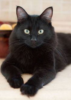 Love black cats!