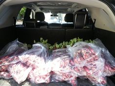 There is never a time that waste is acceptable. This was free rhubarb.  They were giving it away because it had been used as display.  I went and picked it up with a friend. She qorks with new ethnic women to Canada. They had never seen rhubarb. I took my haul home washed, chopped and processed it. I now have 12 large bags in my freezer to turn into all kinds of treats in the winter. Large Bags, Freezer, Baby Car Seats, Ethnic, Canada, Treats, Display, Thoughts, Winter