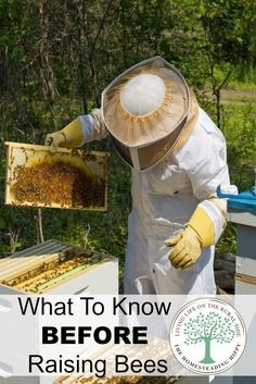 What To Know BEFORE You Start Raising Bees. Beekeeping For BeginnersRaising  BeesBackyard ...