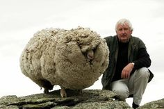 La oveja mas famosa del Mundo