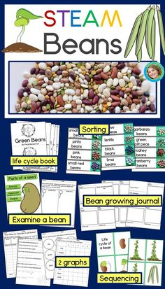 Are you looking for STEAM activities you can do with materials you already have on hand?  This bean STEAM investigation is just the thing!  Your preschool, kindergarten & first grade students will examine beans closely, learning about the parts of a seed & drawing what they see.  They'll plant beans and observe and track their growth, complete graphs, read about the bean life cycle, sequence the life cycle, and sort beans.  With just a bag of beans and this resource, they'll learn so much…