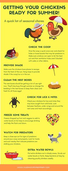 It's time to get your chickens ready for Summer. Get your flock ready for hot days by doing these chores, coop checks and health checks. Keep your flock cool and happy this summer! Infographic to save for a reminder list! Best Chicken Coop, Building A Chicken Coop, Chicken Coops, Keeping Chickens, Raising Chickens, Summer Chicken, Nesting Boxes, Diy Garden Projects, Chickens Backyard