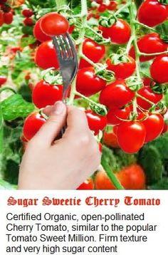 Sugar Sweetie Cherry Tomato