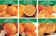 Florida Fruit Gift Baskets | Florida Honeybells | Florida Red Navels http://www.albrittonfruit.com/ count me in ; ) @withlovedd