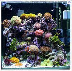 sample reef tank