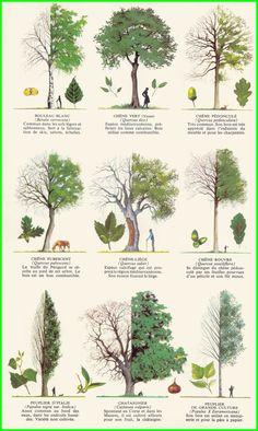 árboles y plantas Nail Desing 5 easy nail art designs Landscape Architecture, Landscape Design, Garden Design, Trees And Shrubs, Trees To Plant, Baumgarten, Tree Identification, Landscape Drawings, Nature Journal