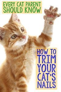 Cat Care Tips... vAll cats, especially indoor kitties, should have their claws cut regularly to avoid injury. Trimming your cat's nails for the first time can be a little tricky, so it's important that you don't plunge...