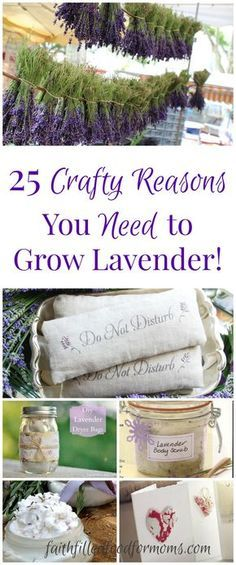 Gardening 25 crafty reasons you need to grow lavender! A beautiful round up of some of the most heavenly lavender crafts! If you don't grow lavender.so easy and so versitile! - 25 creative and crafty reasons you need to grow lavender! Lavender Crafts, Lavender Recipes, Lavender Plant Uses, Drying Lavender, Lavender Wands, Potted Lavender, Lavender Decor, Lavender Fields, Lavander