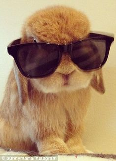 Cute bunny in glasses