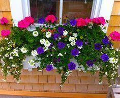 Nantucket Window Boxes!