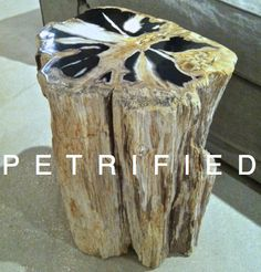 #canvasinteriors petrified wood table