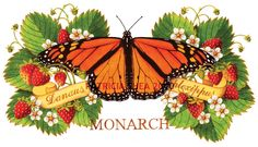 Archival print Monarch Butterfly and Strawberries by Patricia Shea. $45.00, via Etsy.