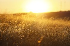 golden summer | Flickr - Photo Sharing!