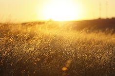 golden summer | Flickr - Photo Sharing!