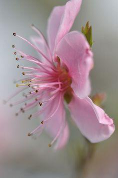 nature rose romantique - Recherche Google
