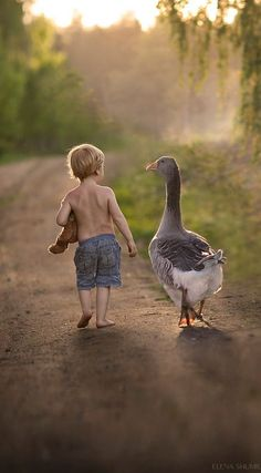 A boy and a goose:
