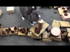 Learn more about our Pet Rabbit Inquiry.  This video is Hop's first adventure outside of her cage.  The students built a bunny world out of blocks, rocks, pine cones, etc.  Listen to their engagement!