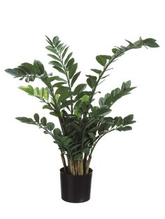 Pack of 2 Potted Artificial Zamioculcas African Style Silk Plants - Green Artificial Flower Arrangements, Artificial Succulents, Artificial Flowers, Zz Plant, Silk Plants, Plastic Pots, African Fashion, African Style, Silk Flowers