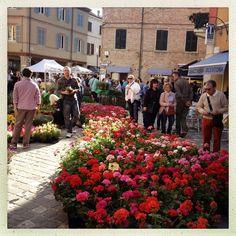 Fiera dei fiori, Santarcangelo di Romagna.