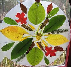 Nature Mandalas from Child in Harmony