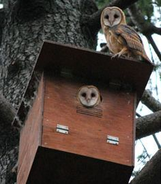 """Another pinner said: """"OWL BOXES: Create  a home for the owl. A family of barn owls can eat up to 3,000 rodents in a four-month period. All, without chemicals. Here's how to attract more to your area..."""""""