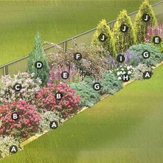 Privacy Landscaping, Front Yard Landscaping, Arborvitae Landscaping, Privacy Shrubs, Landscaping Melbourne, Luxury Landscaping, Landscaping Company, Wisconsin Landscaping Ideas, Houston Landscaping