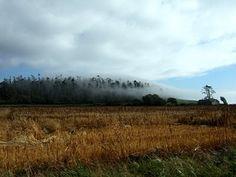 Fog at Ebey's Prairie, Whidbey Island