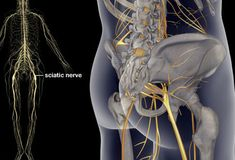Sciatica Pain Cumming Chiropractor Sciatica describes the unceasingly intense pain felt along the sciatic nerve. The sciatic nerve is the longest and widest nerve in the body, running from the lower back through the buttocks and down the back of each leg. Sciatica Pain Treatment, Sciatica Pain Relief, Sciatic Pain, Sciatic Nerve, Nerve Pain, Chronic Sciatica, Sciatica Symptoms, Chronic Pain, Sciatica Stretches