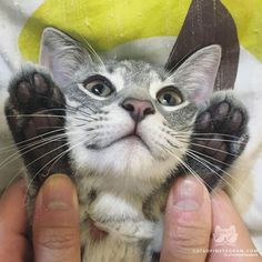 "Kitty Photo From @Heiiolouie: ""Can I get some high fives?"""