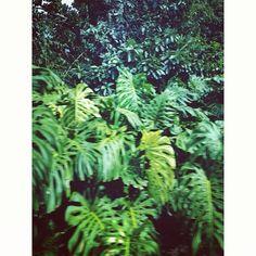 Photo by @happymundane on Instagram #jungle #hawaii