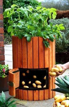 Details about Wooden Potato Barrel Planter Tub Grow Your Own Fruit / Veg Garden/Outdoor/Patio - Garden Types Veg Garden, Garden Types, Garden Beds, Garden Planters, Balcony Planters, Cedar Garden, Garden Care, Small Gardens, Outdoor Gardens