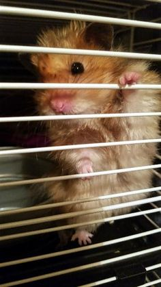 HELP ME!! I'M LOCKED UP! Never!! Not with that ADORABLE FACE!! LVE MY FLUFFhttps://i.redd.it/05di7p0ixfk01.jpg