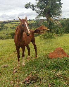 #Horse #Cavalo #Natureza
