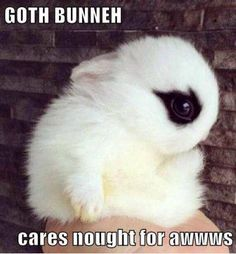 Goth Bunny (not party related but just for lols)