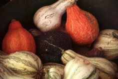 Tips for preserving gourds and using them for season decorations! Preserving Ornamental Gourds- U of I Extension Fall Home Decor, Autumn Home, How To Dry Gourds, Backyard Farmer, Cook County, Decorative Gourds, Fruit Preserves, Bloom Where You Are Planted, Nature Table