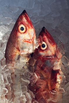 Alex Farnum photographs detailed still lives of food, plants and ingredients. Food Photography Tips, Still Life Photography, Fishing Photography, Dead Fish, Fish Print, Fish And Seafood, Food Design, Food Art, Illustration