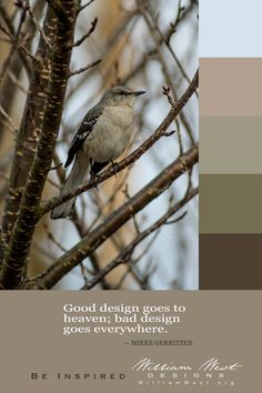 Color inspiration can be perched in a tree. Find your inspiration!