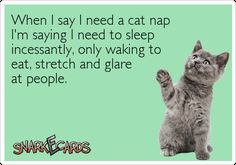 When I say I need a cat nap I'm saying I need to sleep incessantly, only waking to eat, stretch and glare at people.   Snarkecards