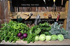 DIY Garden. Spring time harvest. check out a new unique way to garden that is super easy and fun for the kids too! link with how to garden, plans and pictures of what to grow. be healthy and grow your own food. with this new way, it's now easy and fun!
