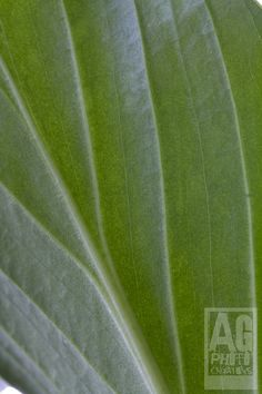 Week52-45 Plant Leaves, Flora, Landscape, Nature, Plants, Naturaleza, Plant, Landscaping, Off Grid