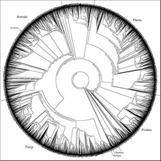 Cladogenetic tree of representatives of all living...