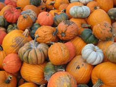 191.12  Visit Red Barns Pumpkin Patch - 365 Things To Do in Austin, Texas - pumpkin5
